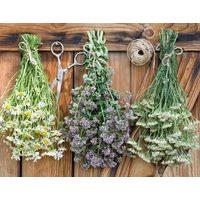 Как правильно собирать и хранить травы и корни