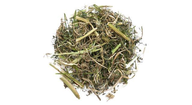 Болиголов трава