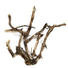 Крапива корень