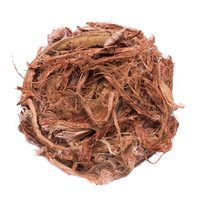 Красный корень (Копеечник)